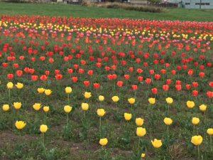 素敵な春の風景 群馬県