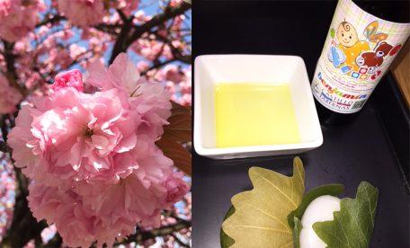 素敵な八重桜を見上げる空でおいしい和菓子とオリーブオイルを