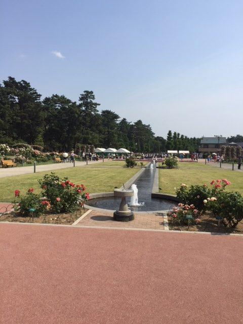 群馬県前橋市 敷島公園のバラ園