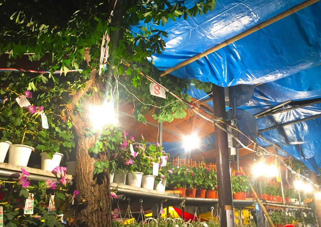 入谷の朝顔祭り 夏の風物詩