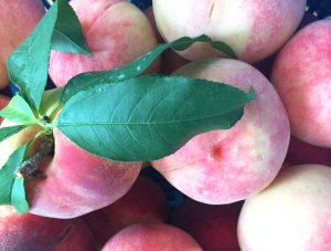 桃 おいしい 季節の恵み