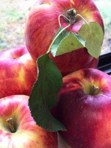 リンゴ,おいしい,オリーブオイル,幸せ