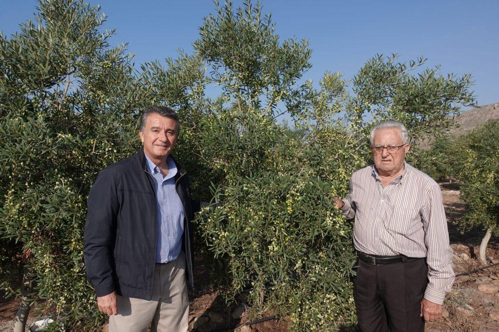 カスティージョ・デ・タベルナス エクストラバージンオリーブオイル 世界最高品質 酸度0.1