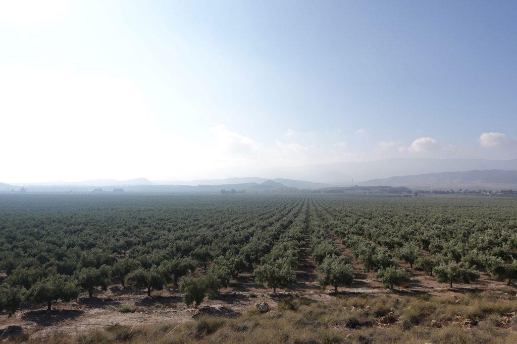 カスティージョ・デ・タベルナス 酸度0.1 世界最高品質のエクストラバージンオリーブオイル