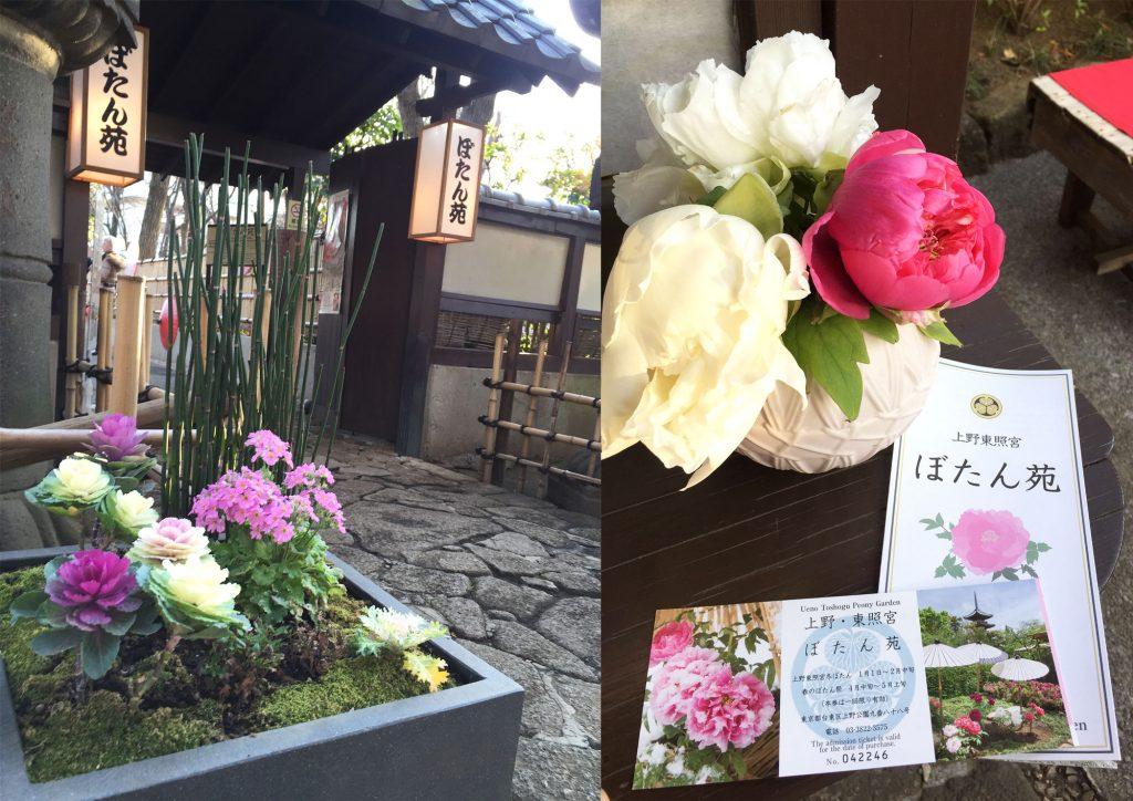 上野東照宮 ぼたん苑