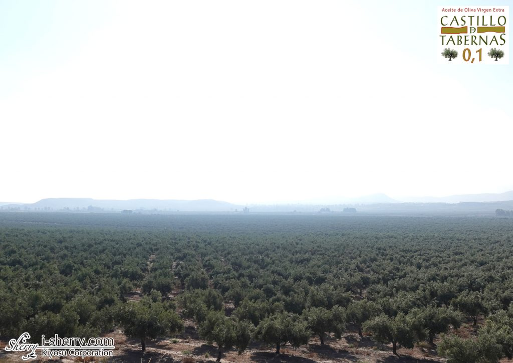 カスティージョ・デ・タベルナス0.1 世界最高品質のエクストラバージンオリーブオイル スペイン アルメリア
