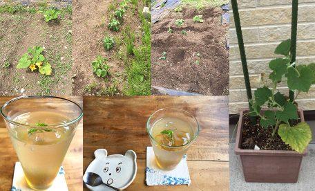 ことしも家庭菜園がんばりま~す!2020